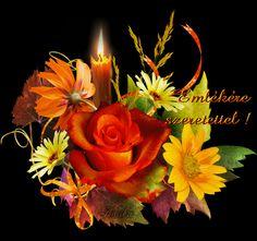 Gyertyaláng.hu | Juhász Károly - Leó gyertyái Rose, Flowers, Plants, Pink, Plant, Roses, Royal Icing Flowers, Flower, Florals