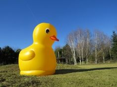 Easter duck hunt at the London Wetland Centre