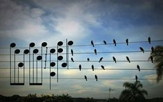 music in nature - Google Search