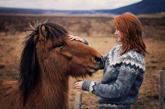 Love those bay Icelandic horses