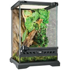 7 Best Cages And Terrariums For Chameleons Images Reptile Cage