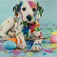 Colorful naughty too cutevia@about_animalslife #love #tweegram #photooftheday #20likes #amazing #followforfollow #smile #dog #pupy #cute #dogsoftheday #dogpark #dogmylove #doglife #dogsmile #dogs #istgramdogs #picoftheday #likers #animals #dogs_of_instagram #doglover #nature #ilovemydog #familydog #portrait #instapuppy #instadog #adorable #dogstting