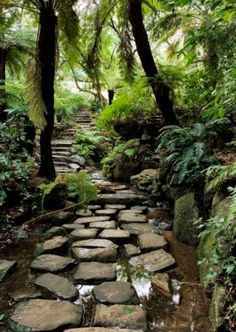 Pathway at Kirstenbosch National Botanical Garden …