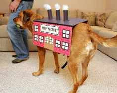 Diy pet halloween costumes halloween costumes costumes and dog solutioingenieria Image collections