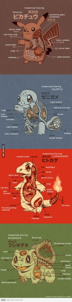 Pokemon Anatomy (English translation)