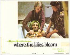 where lilies bloom