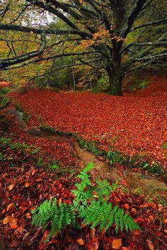 Autumn in Monte Aloia Nature Reserve, Galicia, Spain