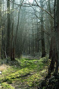 Forêt de Verinnes - Oise