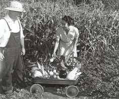 """Home-grown """"Victory Gardens,"""" like this couple's efforts, assured adequate fresh produce at home to replace goods sent to troops overseas. Global Conflict, Victory Garden, Support Our Troops, Farm Gardens, Life Goes On, Historical Photos, World War Ii, American History, Wwii"""