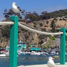 The Green Pier, Avalon, Catalina Island, CA