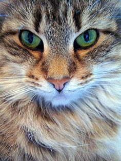 Beautiful green-eyed kitty <3