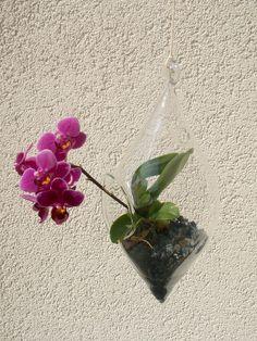 Další ukázka provedení rostlinného terária, do kterého se vsadila mini orchidej výrobce Květiny trochu jinak, cena terária o rozměrech asi 20 x 10 cm s květinou je 421 Kč; Fler CZ