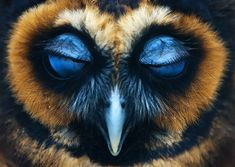 28 incredibly majestic owls caught on camera. Get ready to fall in love with owls.