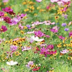 The best wildflowers for spring beauty