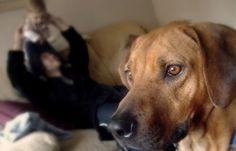 Les animaux ressentent autant la douleur que nous mais pourtant souffrent en silence. Alors comment faire pour reconnaître une douleur chez le chien ? Qu...