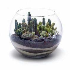 Cactus bowl. Pretty sands