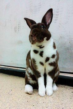 Bee Nittaya Kanathongคนรักกระต่าย มอนิ่งวันหวยออกฮับ^^