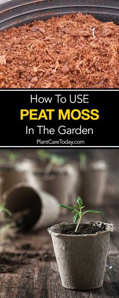 Using Peat Moss &; Do Use Peat In Your Growing? Using Peat Moss &; Do Use Peat In Your Growing? Plant Care Today plantcaretoday Hometalk Gardening Peat moss a great […] gardening aesthetic