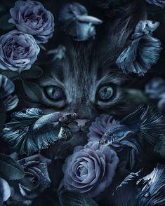 Fine Art photo by Marcel van Luit Van Luit Iphone Wallpaper Cat, Tier Wallpaper, Animal Wallpaper, Animals And Pets, Baby Animals, Cute Animals, Beautiful Creatures, Animals Beautiful, Mode Poster