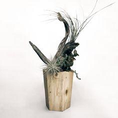 木製の鉢カバー【#鉢 #鉢カバー #植木鉢 #植木鉢カバー #多肉植物 #多肉 #観葉植物 #potcover #succulents #succulove #cactuslover #cactus #planting】