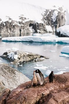 """Weddingpilots"" waren auf ihrer Reise in die Antarktis in guter Gesellschaft. // Have a look at the cute little fellows ""weddingpilots"" met on their trip to Antarctica!"
