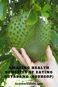 Natural remedies might be the most effective kind of treatment for what ever ails you. See if your specific condition may be treatable utilizing a natural treatment quickly. Coconut Benefits, Matcha Benefits, Lemon Benefits, Health Benefits, Health Tips, Health And Wellness, Soursop Benefits, Health Facts, Natural Cures