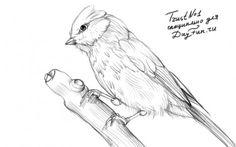 Как нарисовать синицу карандашом поэтапно 4