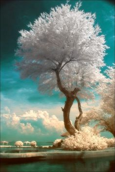 Amazing Pictures of Nature's Creativity - Trees