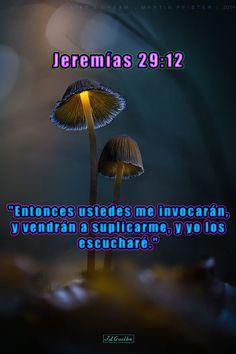 """- Jeremías 29:12 - """"Entonces ustedes me invocarán, y vendrán a suplicarme, y yo los escucharé."""""""
