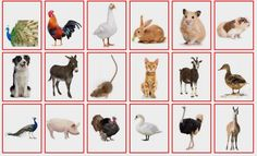(2015-04) Hvem er hvem (dyr #4)? Farm Animal Crafts, Farm Animals, Autumn Theme, A5, Preschool, Teaching, Activities, Speech Language Therapy, Animales