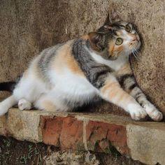 Flor, Ronald, Anastácia e Amora, esses são os gatos. Nick, Nina, Romero, Branca e Clara, são cachorros. Possuo 4 gatos, 2 persas e 2 SRD, E 5 Cachorros SRD.