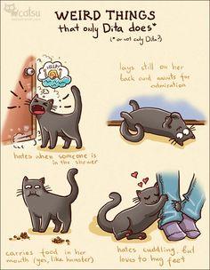 Catsu the Cat - Imgur