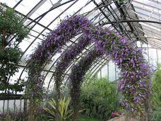 Indoor Garden, Garden Plants, Happy Wanderers, Forest Garden, Dream Garden, Evergreen, Bing Images, Vines, Lilac