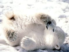 Polar Bear Cubs Weigh About 1 Pound at Birth-Photo 45 - http://1sun4all.com/clean-energy-infographics/polar-bear-cubs-weigh-about-1-pound-at-birth-photo-45/
