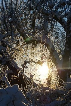 northern light...