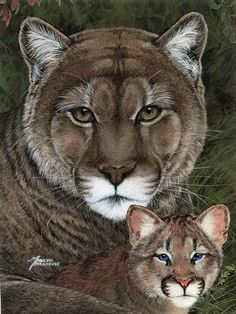 Award-winning Canadian artist Marilyn Barkhouse specializes in photo-realistic paintings of charming cats, dogs and wildlife. The artist's work is now available for licensing by Porterfield's Fine Art Licensing. Big Cats Art, Cat Art, Cute Baby Animals, Funny Animals, Decoupage, Acrylic Artwork, Realistic Paintings, Animal Cards, Canadian Artists