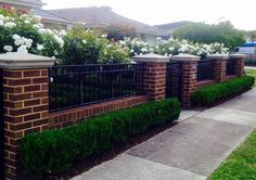 Low brick fence with pillars and box hedge boarder