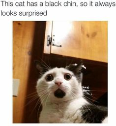 32 Cat Memes To Guarantee You Have A Fabulous And Pawsitive Caturday! is part of Funny - 32 Cat Memes To Guarantee You Have A Fabulous And Pawsitive Caturday! World's largest collection of cat memes and other animals Funny Animal Memes, Funny Cat Videos, Cute Funny Animals, Funny Animal Pictures, Cute Baby Animals, Funny Cute, Funny Shit, Cute Cats, Funny Memes