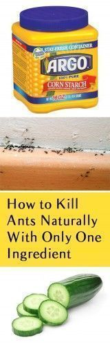 Organic Gardening Supplies Needed For Newbies How To Kill Ants Naturally With Only One Ingredient. Slaughter Ants, How To Kill Ants, Natural Pest Control, Pest Control Hacks, Natural Gardening. Organic Gardening, Gardening Tips, Vegetable Gardening, Urban Gardening, Gardening Supplies, Jardin Decor, Get Rid Of Ants, Rid Ants, Natural Pesticides