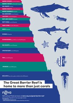 The Great Barrier Reef is home to more than just corals. See this infographic snapshot of some of the diverse animals that call the Great Barrier Reef home. Under The Sea Decorations, Sea Snake, Hard Coral, Soft Corals, Great Barrier Reef, Marine Life, Mammals, Shark, Curiosity