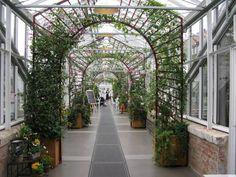 Eine besondere Brunchidee ist der Sonntagsbrunch im Gewächshaus und im Garten der Königlichen Gartenakademie in Dahlem.