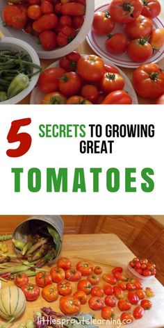 Tomatoes are one of the most popular vegetables grown. Growing great tomatoes at. Tomatoes are one of the most popular vegetables grown. Growing great tomatoes at home is a passion and an art, but it's not that hard to learn how. Growing Tomatoes Indoors, Tips For Growing Tomatoes, Growing Tomato Plants, Growing Tomatoes In Containers, Grow Tomatoes, Baby Tomatoes, Backyard Vegetable Gardens, Tomato Garden, Fall Vegetables