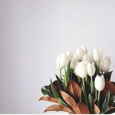 Modern white tulips bouquet with magnolia leaves. Bunch Of Flowers, My Flower, Fresh Flowers, Spring Flowers, Beautiful Flowers, Tulips Flowers, Easter Flowers, Flower App, Elegant Flowers