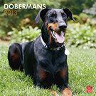 Dobermans (Euro) 2013 Wall Calendar | Doberman Pinschers | CALENDARS.COM