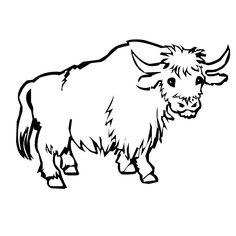 yak photos free - Google Search