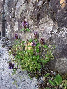 Flowers Flowers, Plants, Pictures, Collection, Photos, Florals, Photo Illustration, Planters, Flower