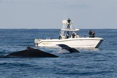 Prowler sightings near Bermuda