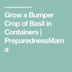 Grow a Bumper Crop of Basil in Containers   PreparednessMama