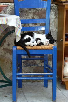 Greek cats | Jacqueline Clowting | Flickr