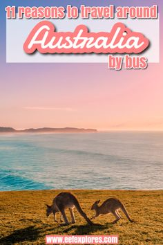 If you're planning to travel around Australia then hopping on the bus might be a very good option for you. I've explored Australia in many ways: by plane, by car and by camper van. And since my last travels I can also say I explored Australia by bus - and I loved it. Here are 11 reasons why. #australia #eastcoastaustralia #australiatravel